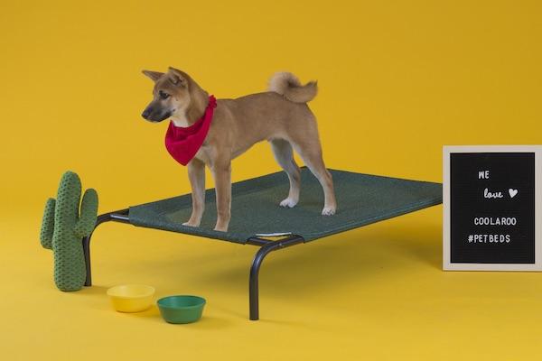 CPETBEDL,Hundebett - orthopädisches Hundebett