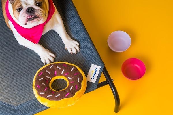 CPETBEDM, gesundes Hundebett -  orthopädisch