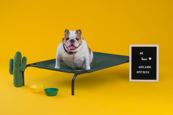 CPETBEDM, Hundekissen -  orthopädisch