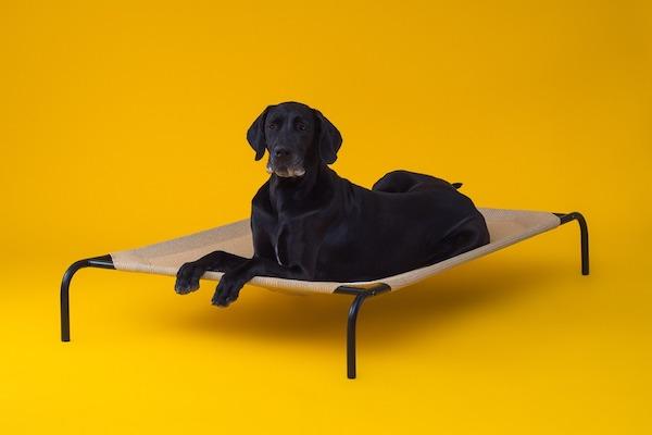 CPETBEDXL, Hundebetten -  gesundes Hundebett